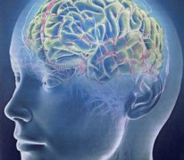 Кнопка «ВКЛ» мозговой активности: «разгоняем» работу мозга