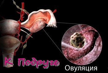 Овуляция - выход зрелой яйцеклетки