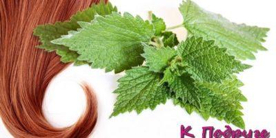 Крапива для волос: маски, ополаскивания, спрей