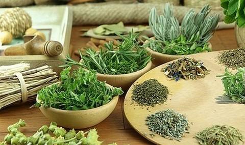 Травяные сборы, «поглощающие» жировые запасы